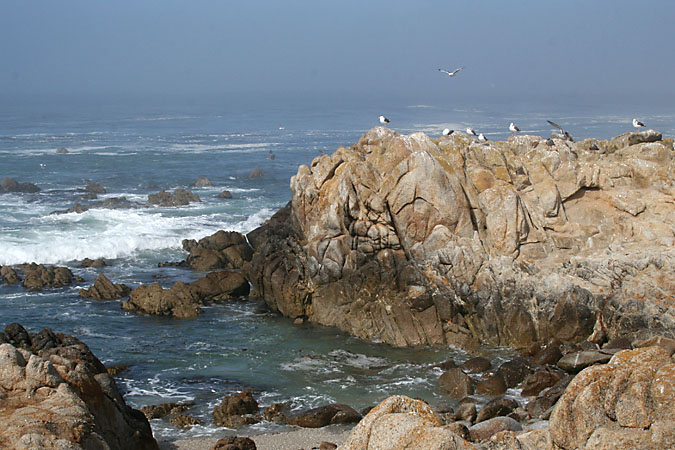 G3189 - The rocky shore in Pacific Grove