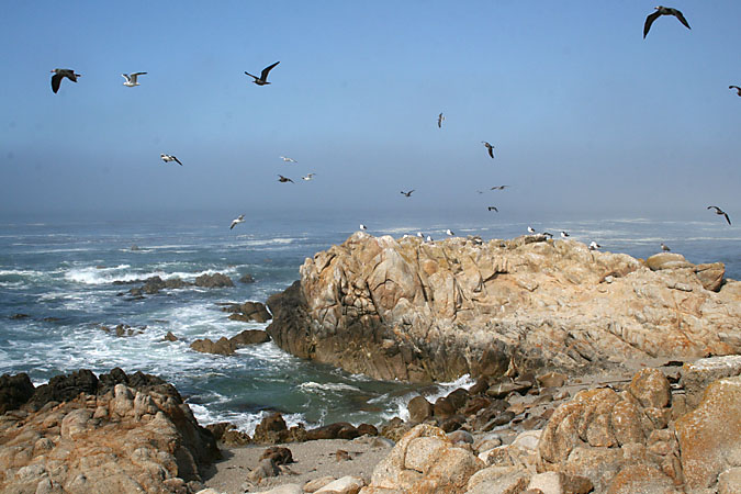 G3190 - The rocky, bird infested shore in Pacific Grove