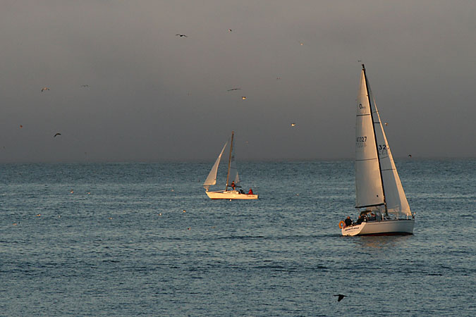 G3215 - Sails in the sunset on Monterey Bay