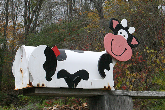Geri took this picture of a mailbox with a cow motif.