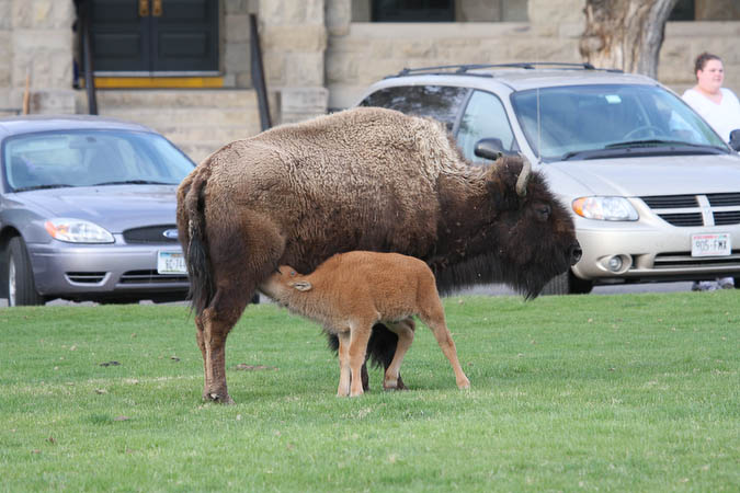 Baby nursing across from the Mammoth Hotel
